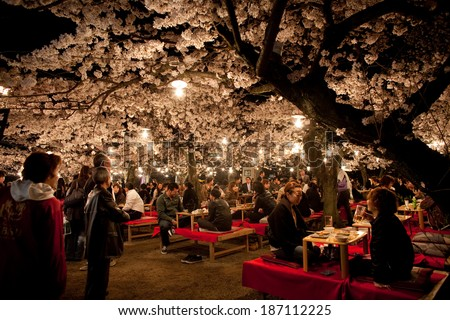 KYOTO, JAPAN - April 4, 2010: Cherry blossom night view in the park. - stock photo