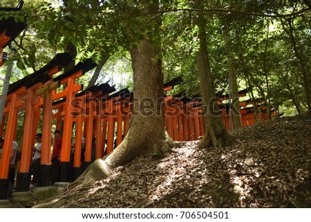 KYOTO, JAPAN, MAY 04 - Torii path inside Fushimi Inari Taisha shrine on may 04, 2017 in Kyoto