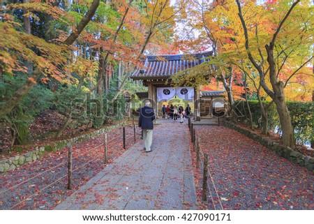 KYOTO, JAPAN -NOV 27, 2012: Tourists sightseeing colorful autumn foliage at Komyoji temple in Nagaokakyo, Kyoto, Japan. Komyo-ji temple is a renowed spot for viewing fall colours. - stock photo