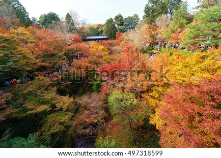 Kyoto, Japan- November 22,2015 : Unidentified tourists visit Tofukuji Temple to celebrate the autumn maple leave festival in Kyoto, Japan.