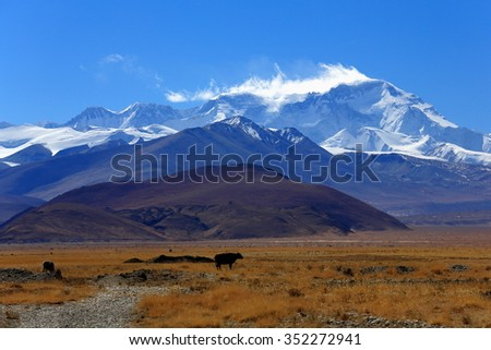 L.toR.= Ngozumpa Kang III 7681 ms.+Ngozumpa Kang II 7743 ms.+Ngozumpa Kang I 7916 ms.+Cho Oyu-Turquoise Goddess 8201 ms.as seen from the tibetan plateau Tingri-Lawn mountain town at 4348 ms. Tibet.