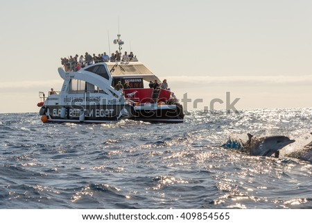 LA GOMERA, SPAIN - FEBRUARY 11. Dolphins in front of a boat with tourist who makes whale watching on the Atlantic on February 11, 2016. The whale watching looks a bit like dolphin hunting
