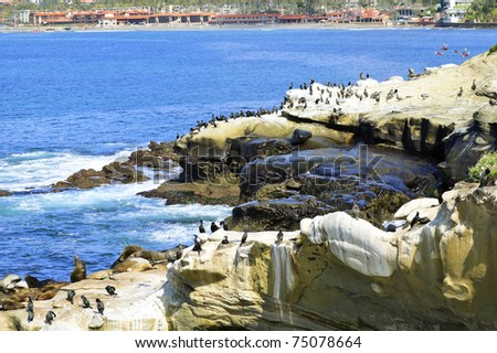 La Jolla Cliff View with Sea lions, Brown Pelicans, and Brandt's Cormorant Birds - stock photo