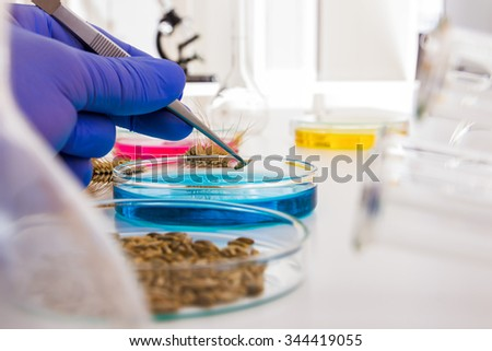 Laboratory assistant in the laboratory of of food quality.Cell culture assay to test genetically modified seed - stock photo