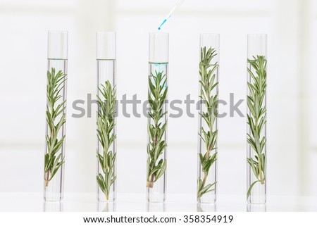 laboratory cloning experiment on plants - stock photo