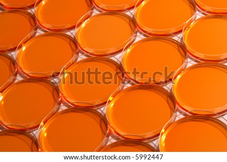 Laboratory petri dishes ready for an experiment in a science research lab - stock photo