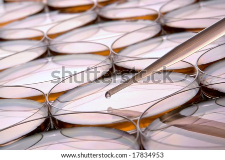 Laboratory pipette with drop of liquid over petri dishes for an experiment in a science research lab