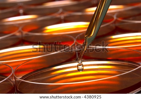 Laboratory pipette with drop of liquid over petri dishes for an experiment in a science research lab  - stock photo