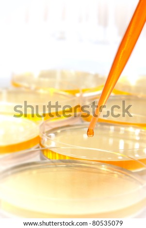 Laboratory pipette with drop of orange liquid over Petri dishes for an experiment in a science research lab - stock photo