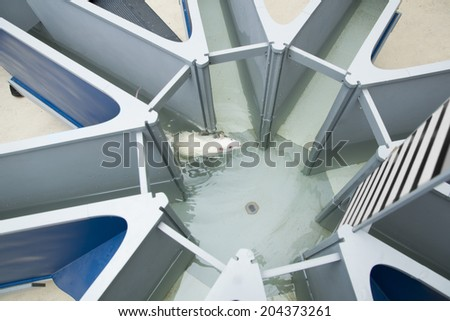 Laboratory white rat in the water radial maze. Behavioral experiments - stock photo