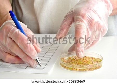 laboratory with offshoots in a petri dish - stock photo