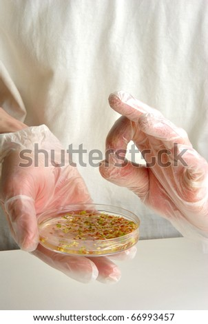 laboratoy with offshoots in a petri dish