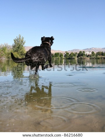 labrador - stock photo