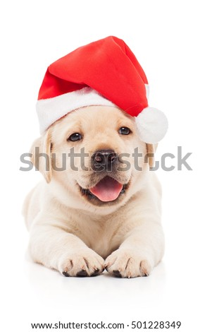 Labrador puppy in a Santa Claus hat