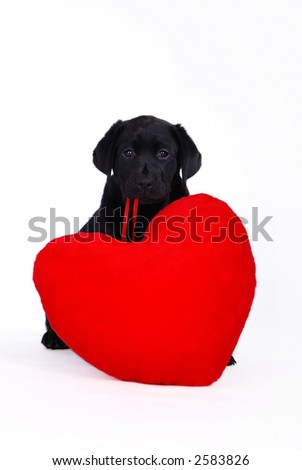 Labrador puppy with red heart - stock photo