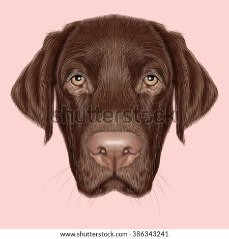 Labrador Retriever Dog portrait. Illustrated portrait of Chocolate Labrador on pink background. - stock photo