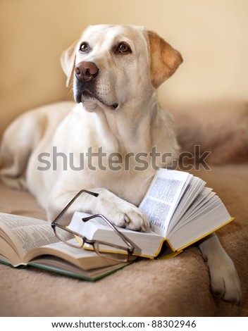 Labrador retriever is reading a book - stock photo