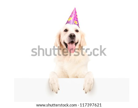 Labrador retriever with party hat posing on a blank panel isolated on white background - stock photo