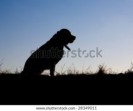 Labrador silhouette sitting on knoll at sunset - stock photo