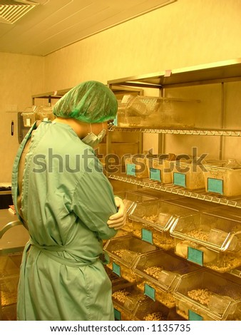 labworker observing the test subjects (white rats) - stock photo