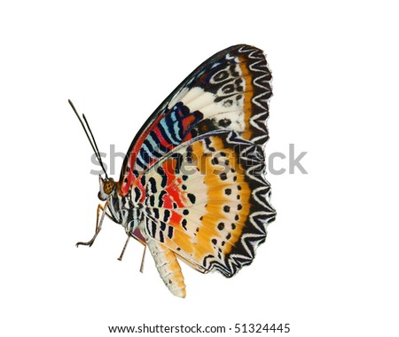 Lacewing Butterfly Isolated - stock photo