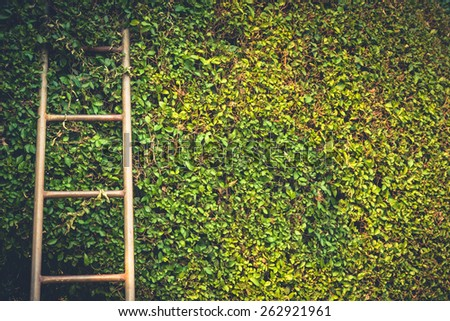 Ladder on trimmed tree wall - stock photo