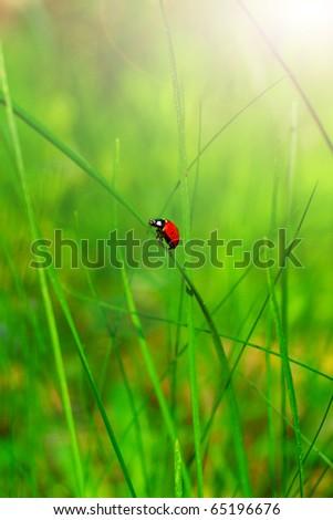 Lady bird on green leaf - stock photo