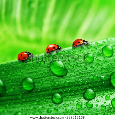 lady bug - stock photo