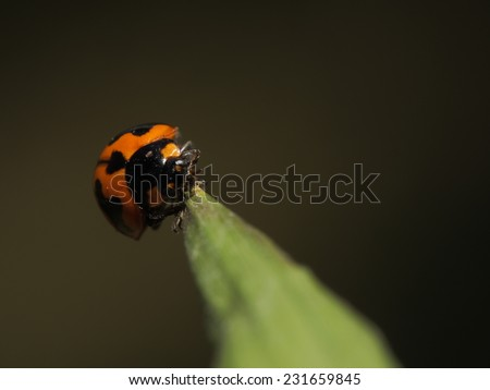 Lady Bug on the grass