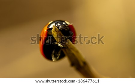 Lady bug on the top