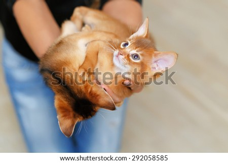Lady holding little cute kittens. - stock photo