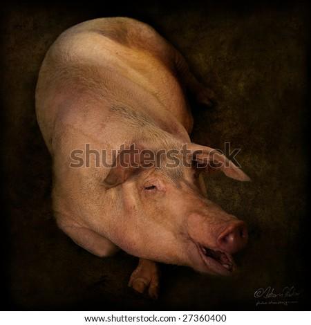 Lady Marmalade Pig - stock photo