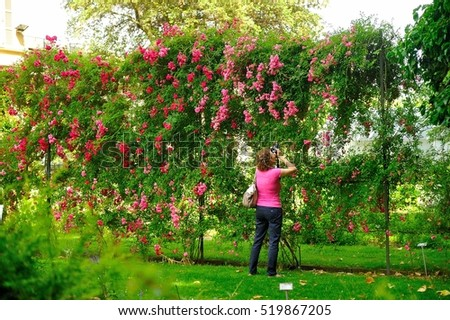 Lady Photographing A Rose Garden