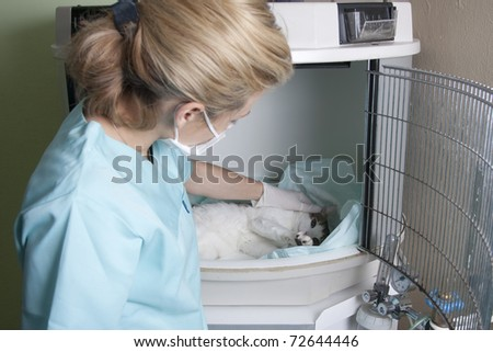 Lady vet with a cat - stock photo