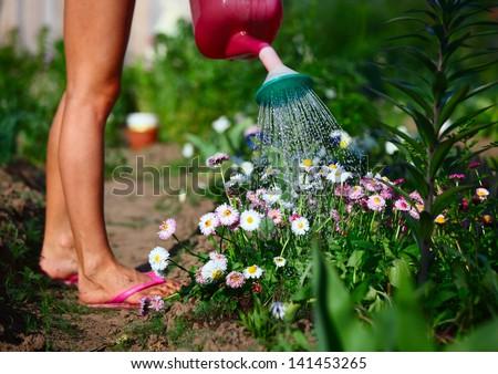 Lady watering flowers in a green garden - stock photo