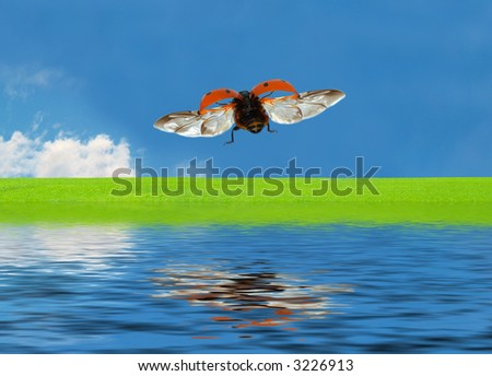 Ladybird flying over the Water towards a green Meadow - stock photo