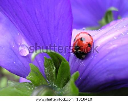 ladybird on a flower - stock photo