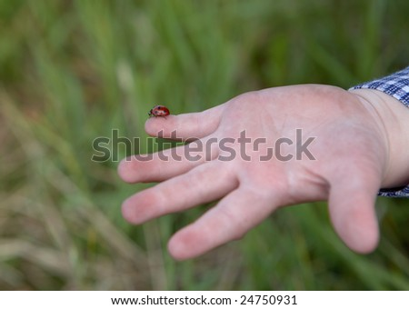 Ladybird on a hand of the child - stock photo