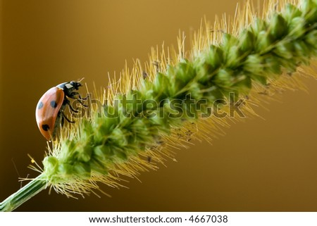 Ladybird on cone on a brown background