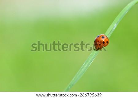 ladybird on green leaf - stock photo