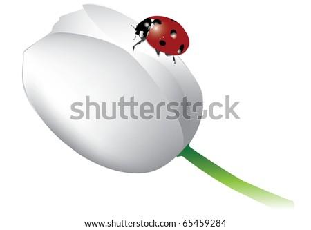Ladybird on the tulip - stock photo