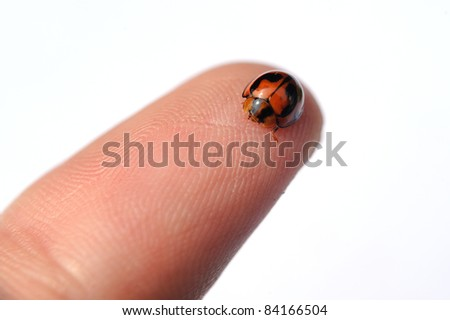 Ladybird sitting on a finger isolated against white background, selective focus.