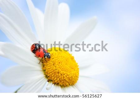 ladybug - stock photo