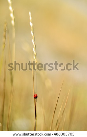 ladybug in the field .
