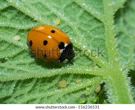 Ladybug is among the baby insects. One big happy family. - stock photo