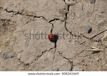 ladybug on a dry cracked ground