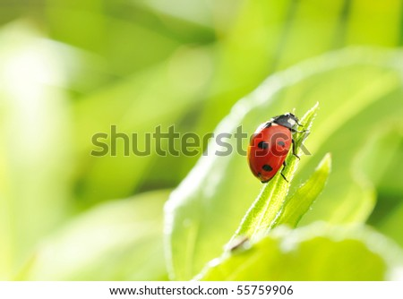 Ladybug on a grass with shallow DOF - stock photo