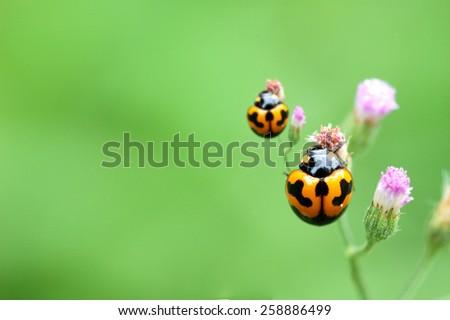 ladybug on a green leaf macro - stock photo