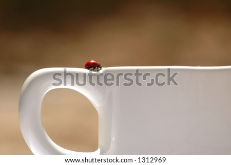 Ladybug on coffee cup - stock photo