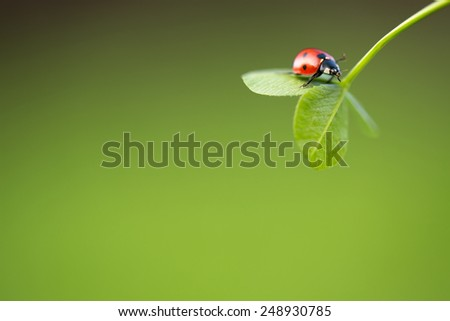 Ladybug on green leaf and green background - stock photo
